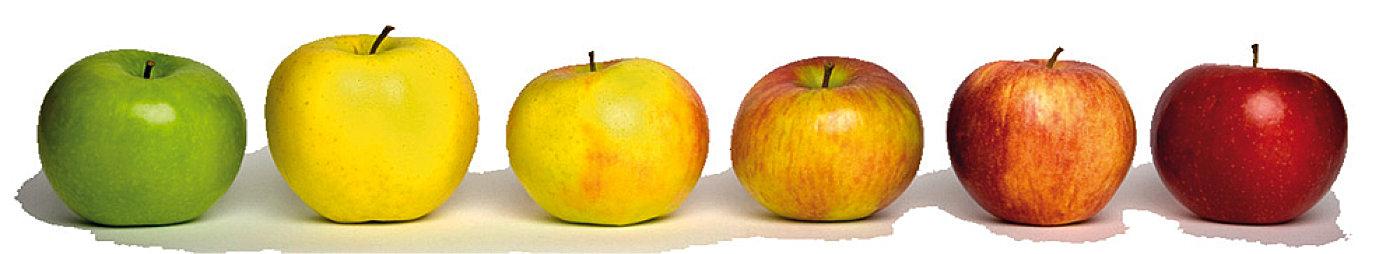 Artland Mosterei Apfelleiste