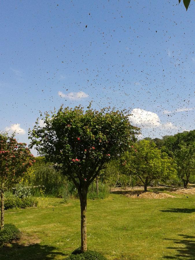 Artland Mosterei - Bienenschwarm Bild 01