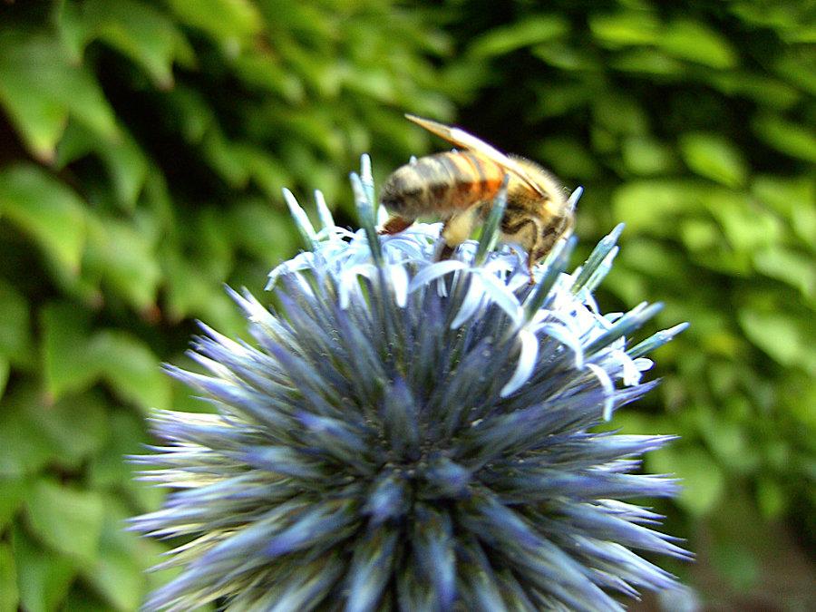 Artland Mosterei - Blüten Bild 02