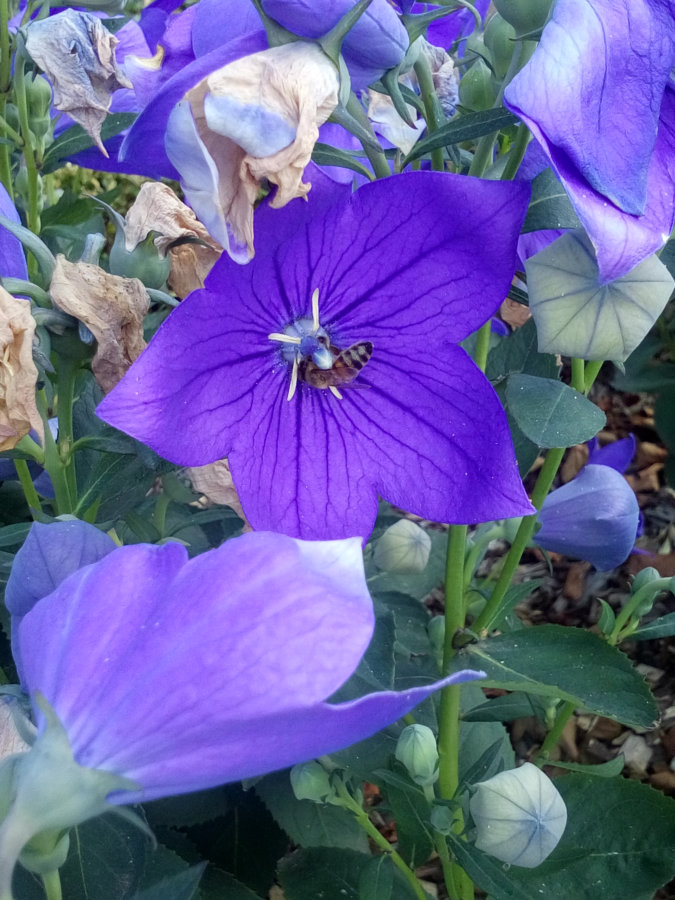 Artland Mosterei - Blüten Bild 03