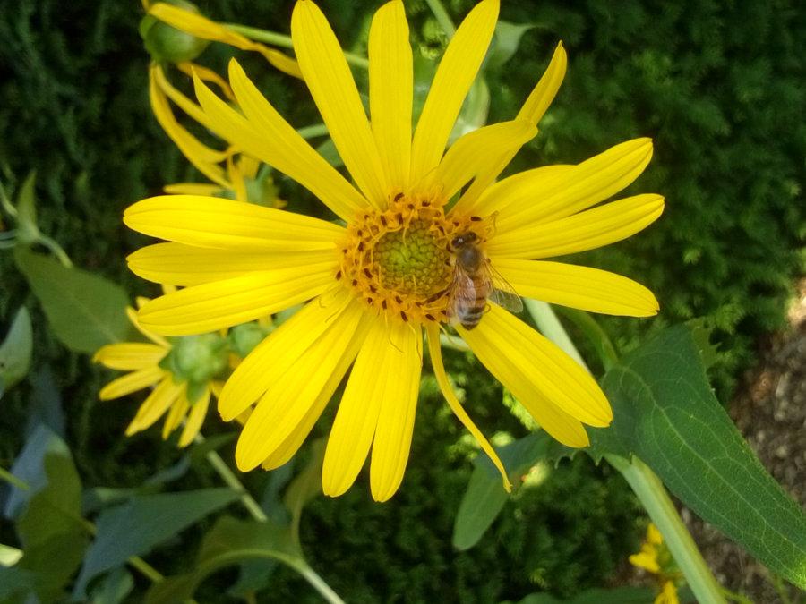 Artland Mosterei - Blüten Bild 04