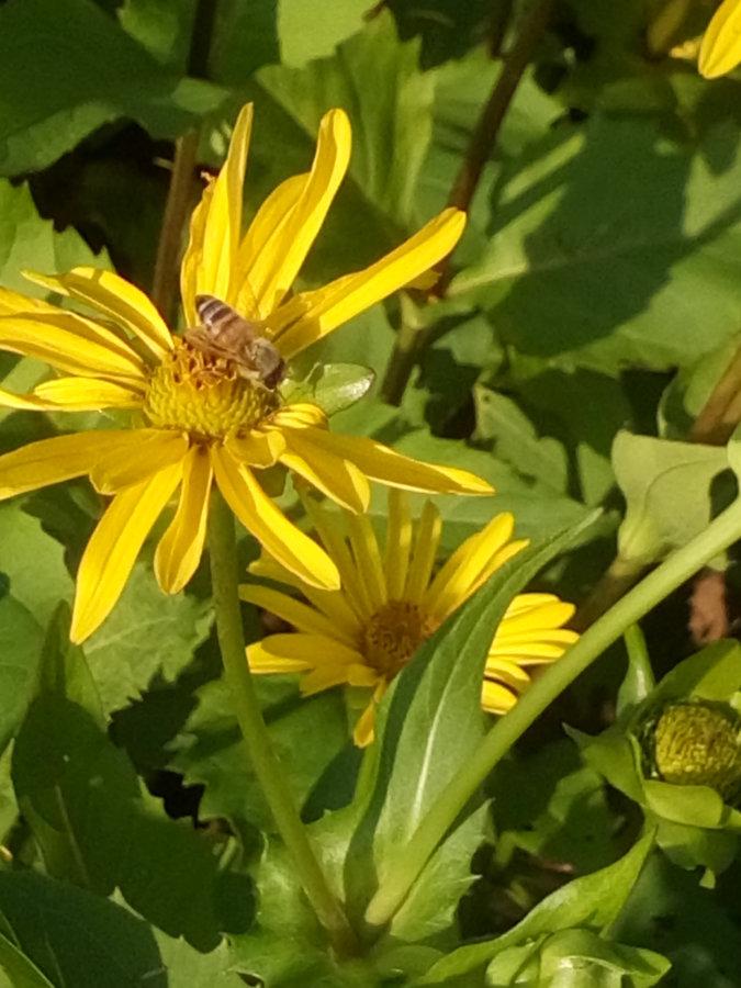 Artland Mosterei - Blüten Bild 05