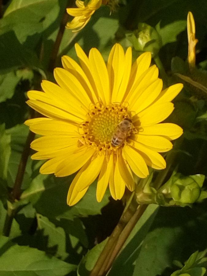 Artland Mosterei - Blüten Bild 06