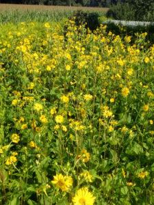 Artland Mosterei - Blüten Bild 07