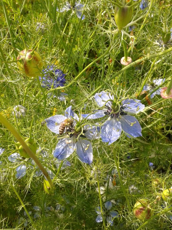 Artland Mosterei - Blüten Bild 08