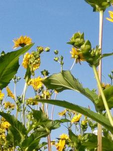 Artland Mosterei - Blüten Bild 09